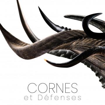 Horns - zebu, ram, buffalo and many others - knivesmaking