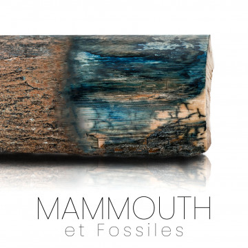 Mammoth: Ivory and molar - unique and rare exceptional pieces
