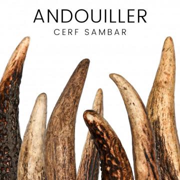 Andouiller de cerf Sambar - pour couteaux