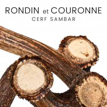 Rondins et couronnes de sambar  / meule et merrain