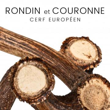 Rondins et couronnes de cerf européens - pour couteaux