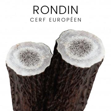 Rondin /merrain de cerf Européen pour couteaux