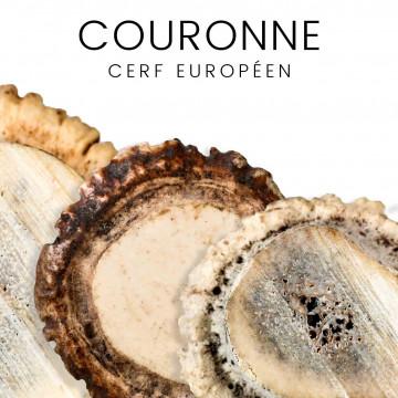 Corone di cervo europeo per coltelli