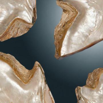 Molte conchiglie di madreperla bianca - promozioni