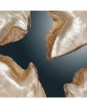 Conchas de nácar blanco