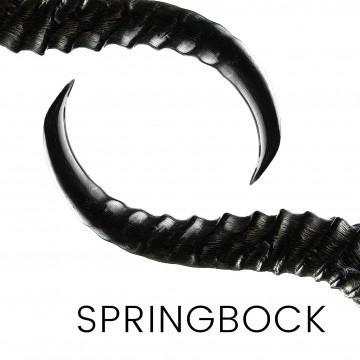 Springbock