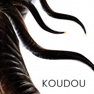 Koudou - cornes pour fabrication de couteaux