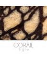 Tiger coral